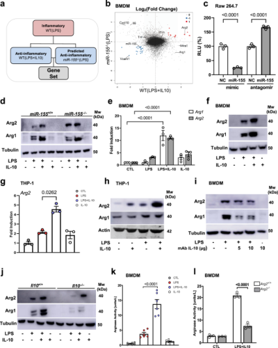 Mitochondrial arginase-2 is essential for IL-10 metabolic reprogramming of inflammatory macrophages