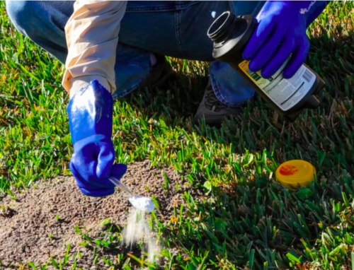 Don't Let Pests Ant-Agonize You — Here's How To Get Rid of Ants