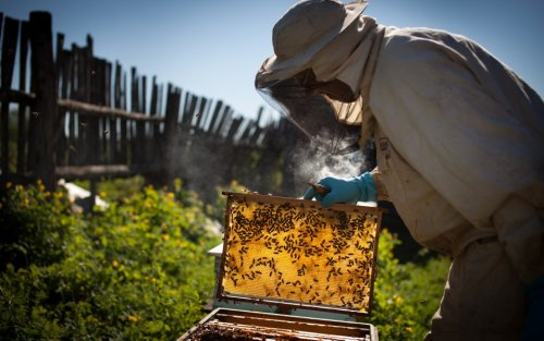 Honey, These Beekeeping Starter Sets Are the Best Way To Start Your New Hobby