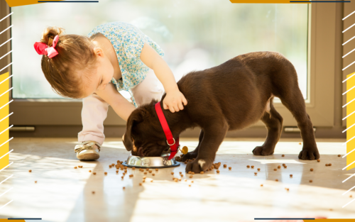 The Best Dry Dog Food for Puppies, Adults and Seniors
