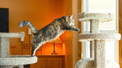 Cat furniture designed with cats in mind — Purrniture