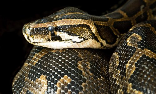 6ft Boa constrictor snake on the loose in UK village sparks fear