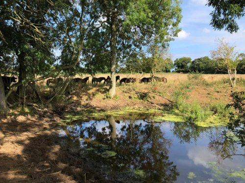 Regenerative farming and rewilding deployed to help climate and wildlife