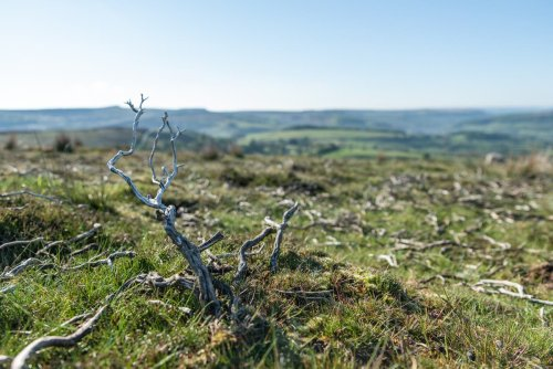 Moorland twice the size of Greater London devoted to raising grouse, says study
