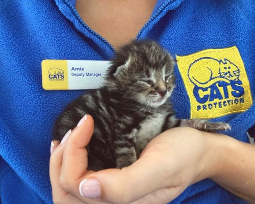 Kitten Tiny Tim 'doing amazingly' after being found alone in garden at week old