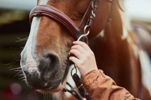 Girl, 2, dies after falling off her pony at hunt