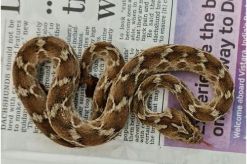 Deadly snake found in Essex in shipment from India
