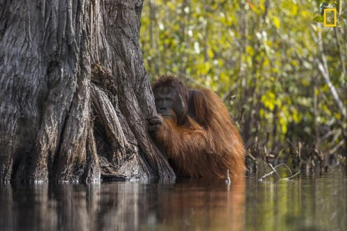 Stunning National Geographic Nature Photographer of the Year revealed