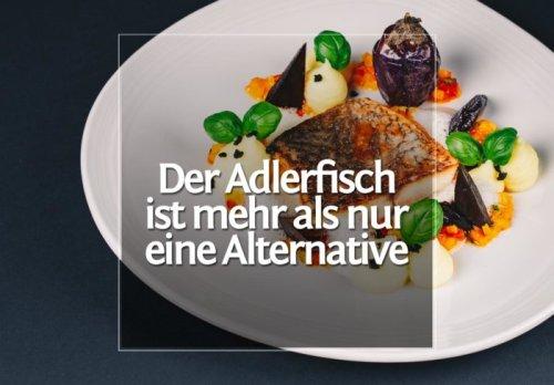 Der unterbewertete Adlerfisch – Ein Rezept