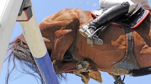 Mehrere Pferde nach Herpes-Infektion verstorben – Weltverband sagt Turniere in zehn Ländern ab