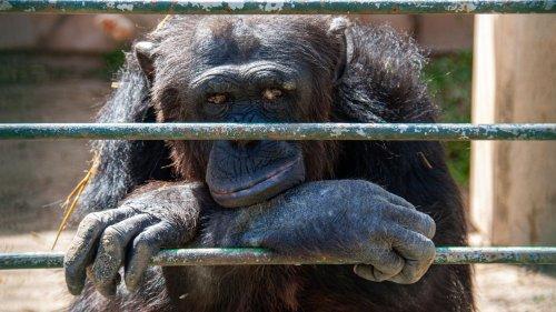 Klöckner will Wildtiere in Zirkussen verbieten – und erntet heftige Kritik