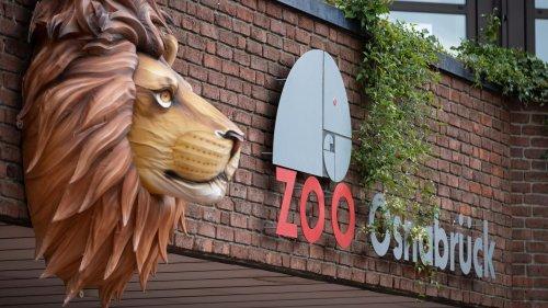 Löwenangriff im Zoo Osnabrück: Tierpflegerin verletzt