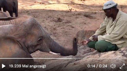 Elefantendame wird ausgewildert – 10 Jahre später besucht sie ihren Pfleger mit ihrem Kalb