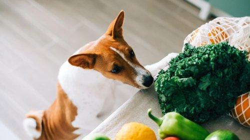 Bis zu 20.000 Pfund Strafe: Wer seinen Hund fleischlos ernährt, wird in England hart bestraft