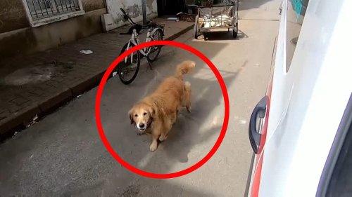 Hund darf nicht zu Frauchen in den Krankenwagen – und startet herzerreißende Verfolgungsjagd