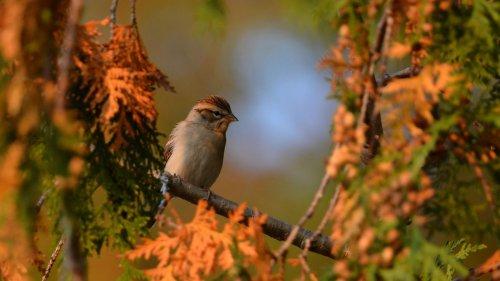 Der Natur ganz nah: So lassen sich Wildvögel am besten beobachten
