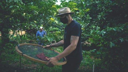 Erst Dürre, dann Frost: Wetterkapriolen lassen Kaffee-Preis explodieren