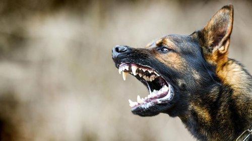 Mehrere Hunde greifen Joggerin an - Bisse am ganzen Körper