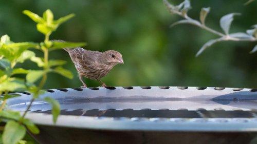 Vogeltränke auf Balkonien: Ein Trend, der Schule machen sollte