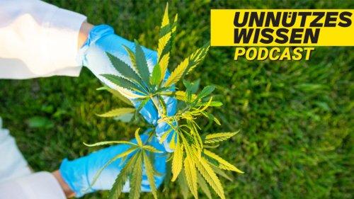 Legales Marihuana hat in den USA etwa 245.000 Arbeitsplätze geschaffen