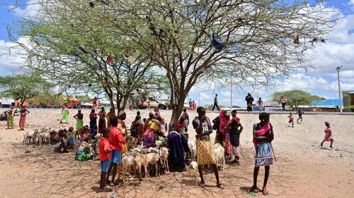 Der Hunger in Ostafrika ist wieder da – wie kann das sein?
