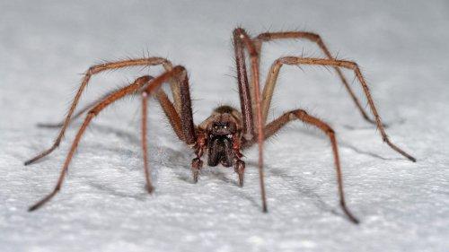 Teenager verursacht Polizeieinsatz wegen einer Spinne in ihrem Zimmer