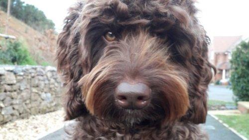 Feuerwehrhund Rigby rettet Frau, die sich das Leben nehmen will