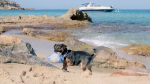 Süßer Hund befreit Strand auf Ibiza von Plastik