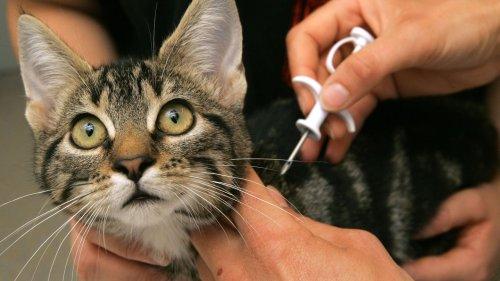 Katze verschwindet spurlos – nach 10 Jahren wird sie wiederentdeckt