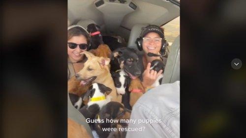 27 Hunde an Bord: Tierschützer retten Welpen vor dem Tod und fliegen mit ihnen davon