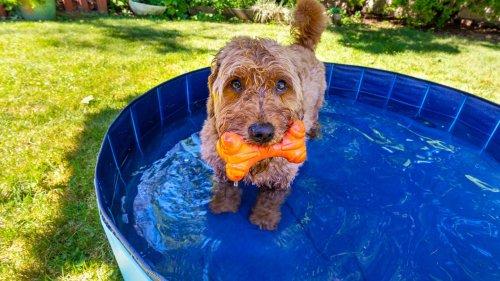 Ein Hundepool unterstützt Ihr Haustier an heißen Tagen