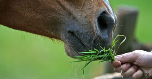 Mum urges the public not to feed horses after an increase in deaths