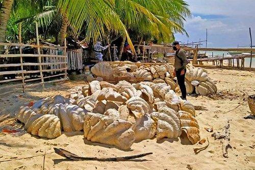 Giant clam shells worth $33 million seized in Philippine raid