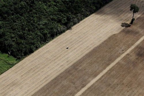 Since 2010, Amazon rainforest emitted more CO2 than it absorbed, study shows