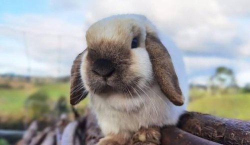 'I sleep with a loaded gun': Rabbit breeder's admission alarms judge