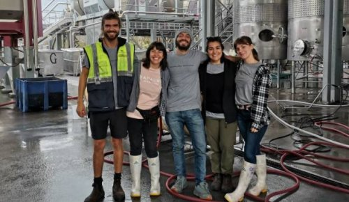 Labour shortage leaves wine industry facing uncomfortable truth