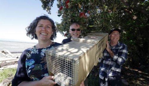 Golden Bay pest eradication project plan gets $3m boost