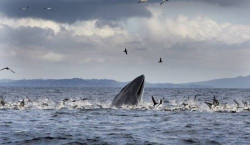 Huge threats facing critically endangered Bryde's whale the target of new Auckland art campaign