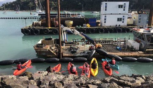 Large police presence at Waiheke's Kennedy Point as fight to protect penguins escalates