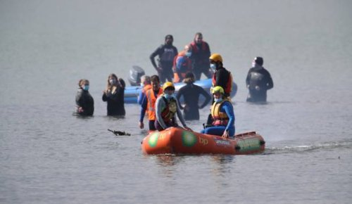 Operation underway to refloat three dolphins stranded in shallow water in Porirua Harbour