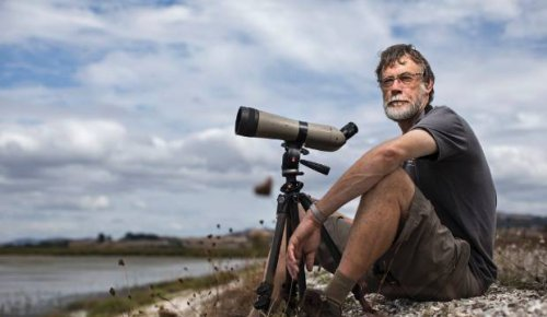 'Spectacular' sight of godwit migration to Firth of Thames reserved for one man