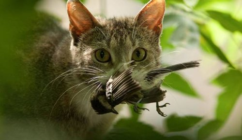 Fish and Game cancel cat cull competition