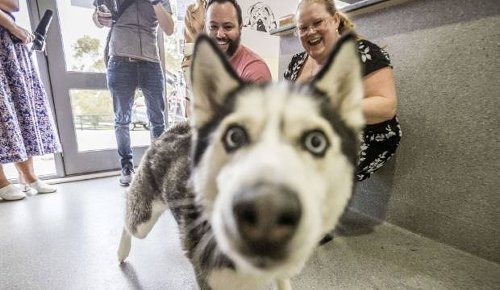Covid-19: Pets, owners finally reunited after border closures cause long separation