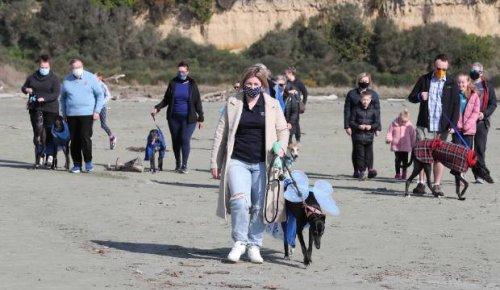 Greyhounds take a stroll along Caroline Bay