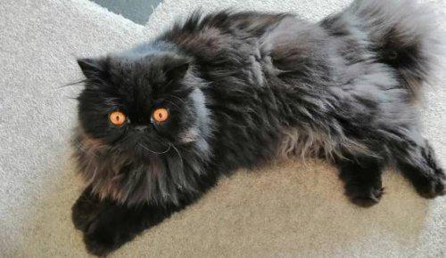 Furry Friday: Eyes that mesmerise