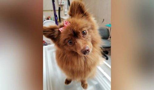 'Attila the Hun' approach to dog control urged in South Taranaki after rise in attacks