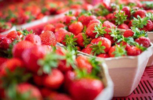 Ernte in der Region Stuttgart: Darum verschiebt sich die Erdbeersaison in diesem Jahr