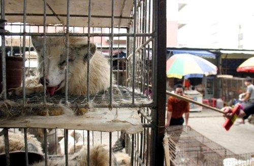 Welt-Zoonose-Tag: Wildtiermärkte in Asien – Brutstätten für Krankheiten
