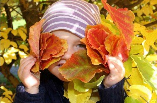 Laub im Herbst: Fluch und Segen der bunten Blätter