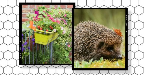 How to turn your home into a wildlife haven (even if you don't have a garden)